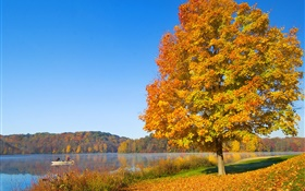 Autumn, tree, yellow leaves, river HD wallpaper