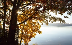 Autumn, yellow leaves tree, lake, sun HD wallpaper