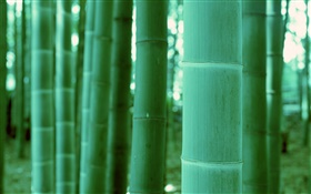 Bamboo close-up, bokeh HD wallpaper