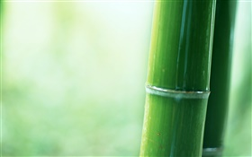 Bamboo partial close-up HD wallpaper