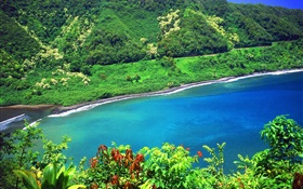 Bay, sea, mountains, green plants, Hawaii, USA HD wallpaper