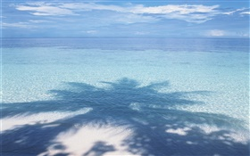 Beach, sea, palm tree shadow, Maldives HD wallpaper