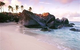 Beach, sea, stones, rocks, palm trees HD wallpaper