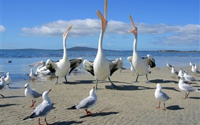 Beach, seagulls, sea birds