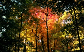 Beautiful autumn forest, red leaves HD wallpaper