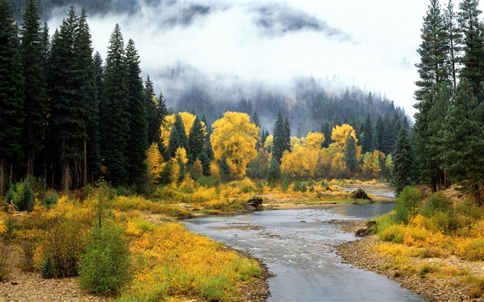 Beautiful nature landscape, forest, trees, fog, river, autumn Wallpapers Pictures Photos Images