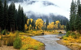 Beautiful nature landscape, forest, trees, fog, river, autumn