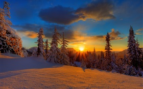 Beautiful sunset, winter, snow, trees, dusk HD wallpaper