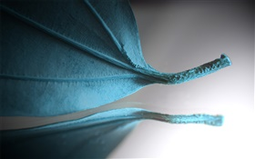 Blue leaf, creative pictures