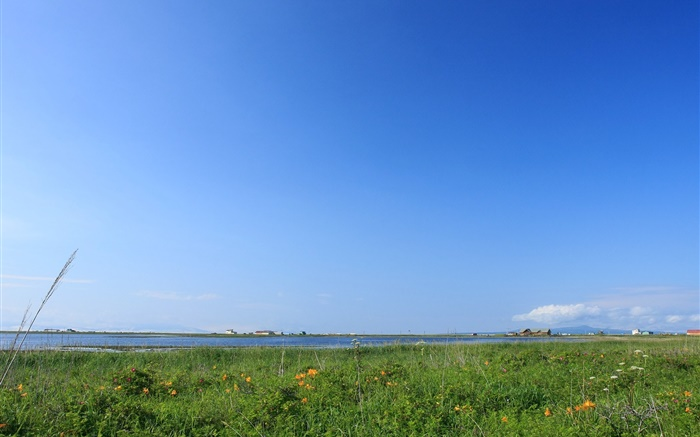 Blue sky, grass, coast, Hokkaido, Japan Wallpapers Pictures Photos Images