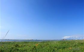 Blue sky, grass, coast, Hokkaido, Japan HD wallpaper