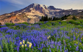 Blue wildflowers, mountains HD wallpaper