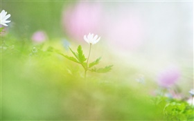 Blur photography, white flower HD wallpaper