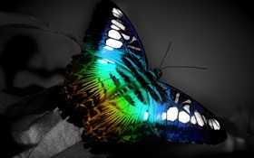 Butterfly macro, blue black colors HD wallpaper
