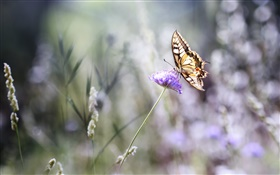 Butterfly, purple flower, bokeh, summer HD wallpaper