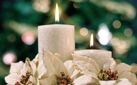 Christmas theme, white candles HD wallpaper