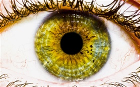Creative pictures, yellow eye, pupil HD wallpaper
