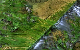 Creek, moss, water HD wallpaper