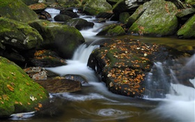 Creek, stones, red leaves, autumn HD wallpaper