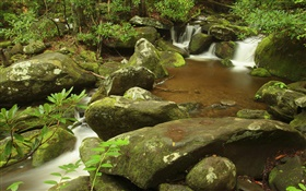Creek, summer, Great Smoky Mountains National Park, Tennessee, USA HD wallpaper