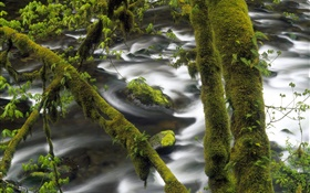 Creek, water, tree, green moss HD wallpaper