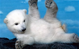 Cute white polar bear cub HD wallpaper