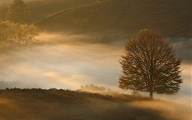 Dawn, tree, grass, mist HD wallpaper