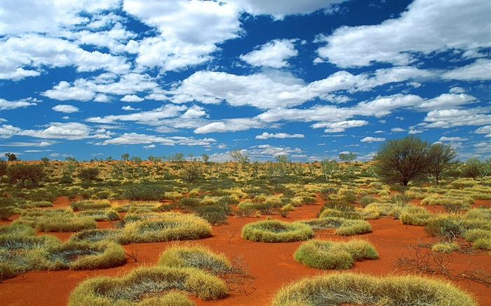 Desert, grass, clouds, Australia Wallpapers Pictures Photos Images