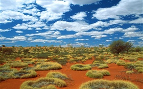 Desert, grass, clouds, Australia HD wallpaper