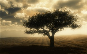 Dusk, tree, clouds, ground HD wallpaper