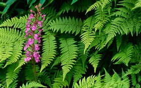 Ferns and Flowers HD wallpaper