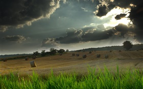 Field, hay, grass, cloudy sky, sun rays HD wallpaper
