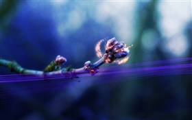 Flower buds, ladybug, magic, creative pictures HD wallpaper