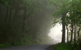 Forest, road, trees, fog, morning