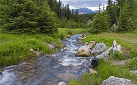 Forest, trees, grass, mountains, creek
