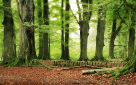 Forest, trees, green, Desktopography design HD wallpaper