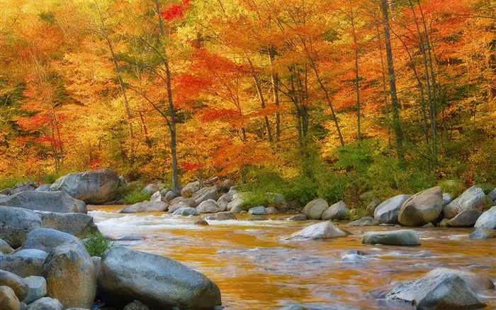 Forest, trees, red leaves, river, stones, autumn Wallpapers Pictures Photos Images