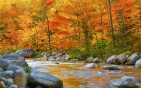 Forest, trees, red leaves, river, stones, autumn
