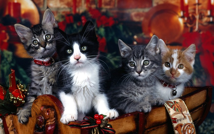 Four kittens, Christmas Wallpapers Pictures Photos Images
