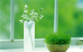 Glass cup, plants, green, window, spring HD wallpaper