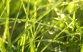 Grass after the rain, water drops, sunshine HD wallpaper