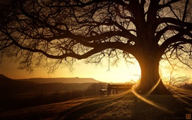 Great tree, bench, sunset, light rays, creative pictures HD wallpaper