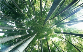 Green bamboo, top view, glare HD wallpaper
