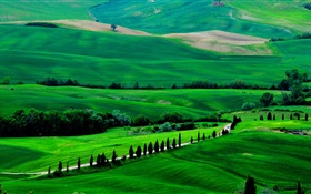 Green field, Tuscany, Italy, trees, road HD wallpaper
