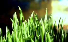 Green grass close-up, bokeh HD wallpaper