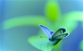Green leaf, butterfly, moth, insect, bokeh HD wallpaper