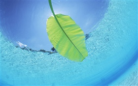Green leaf, underwater, sea, Maldives HD wallpaper