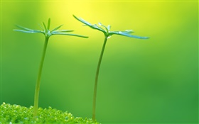 Green, spring, plants buds, fresh HD wallpaper