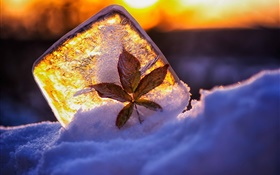 Ice, leaf, snow, sunlight HD wallpaper