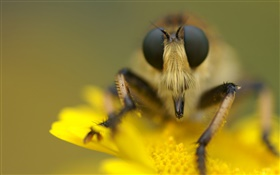 Insect and yellow flower macro photography HD wallpaper